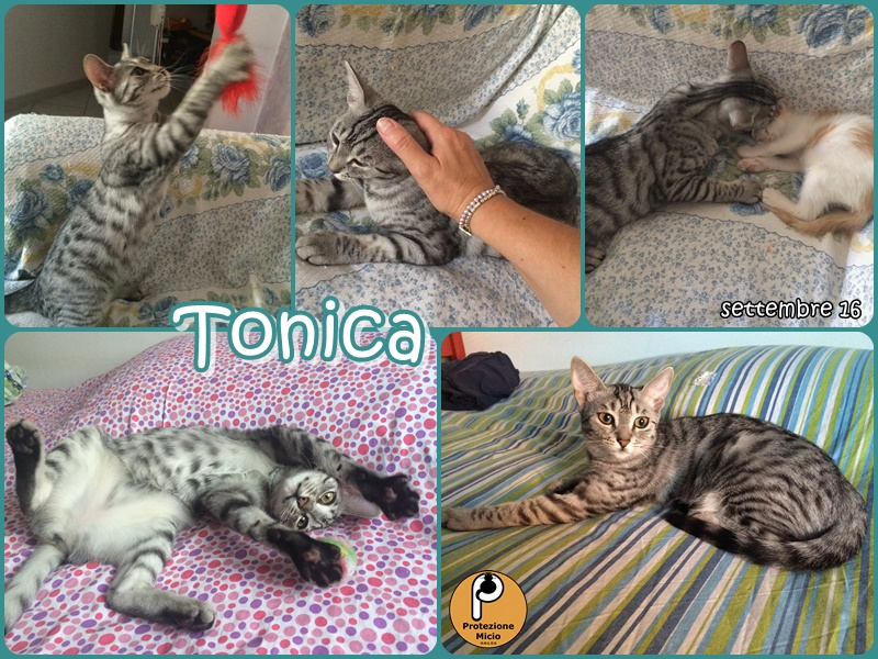 tonica-collage