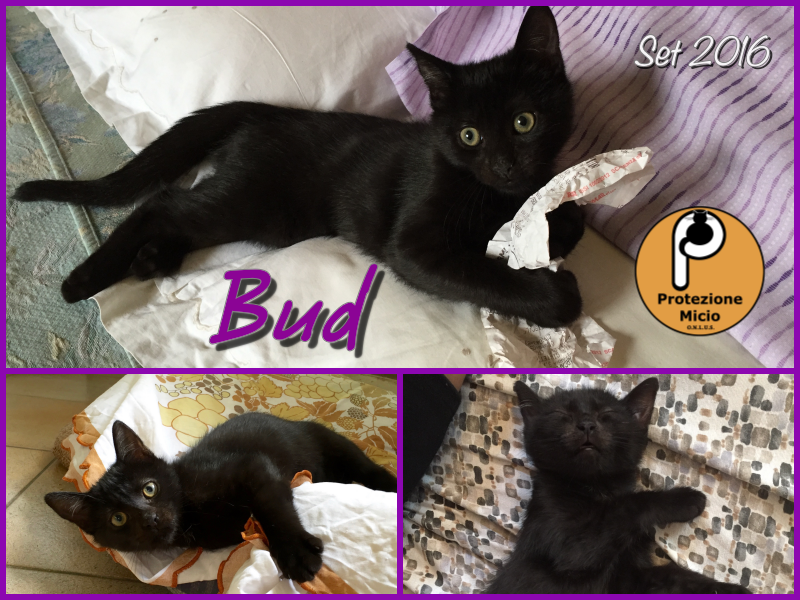 collage-2-bud